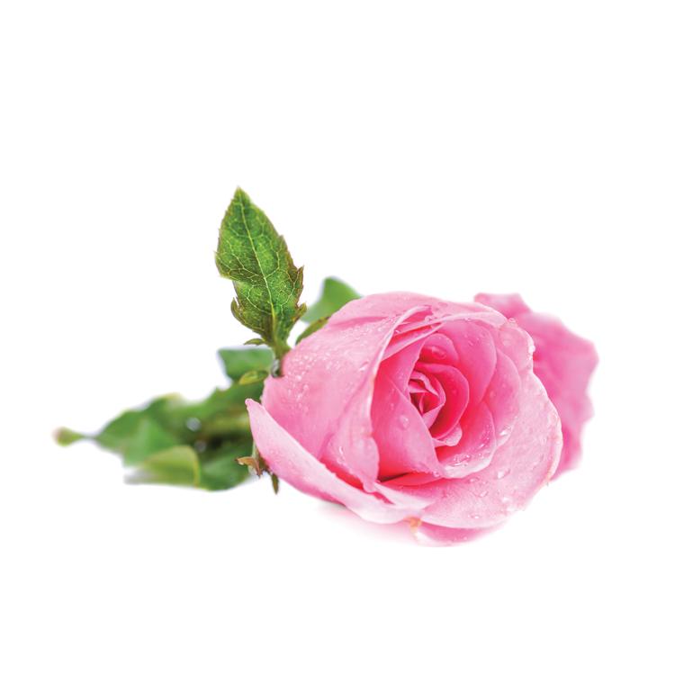 rose-ernst-2015